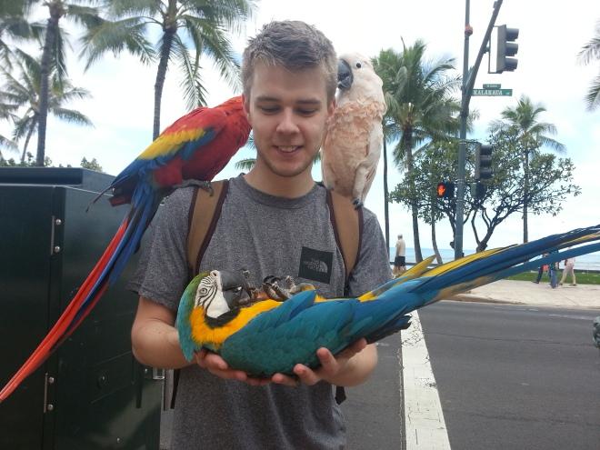 Waikiki Parrots