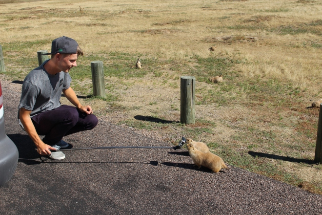 Devils Tower Prairie Dogs